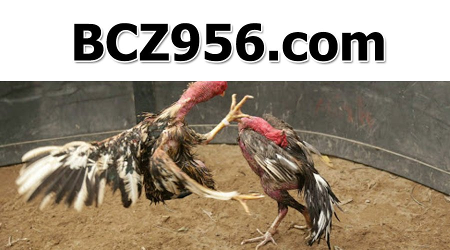 Link vào trang web BCZ956